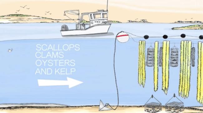Bren ocean farming