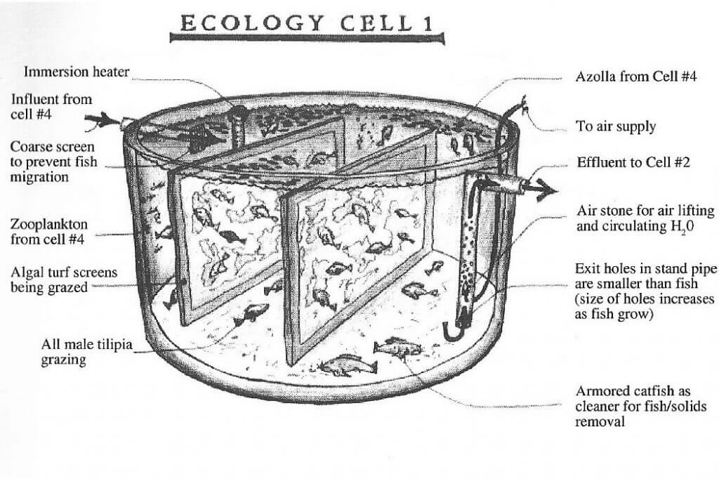 todd_ecology_cells_1
