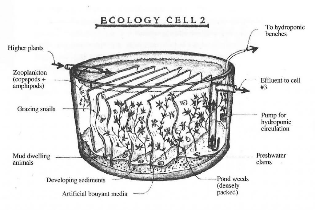todd_ecology_cells_2