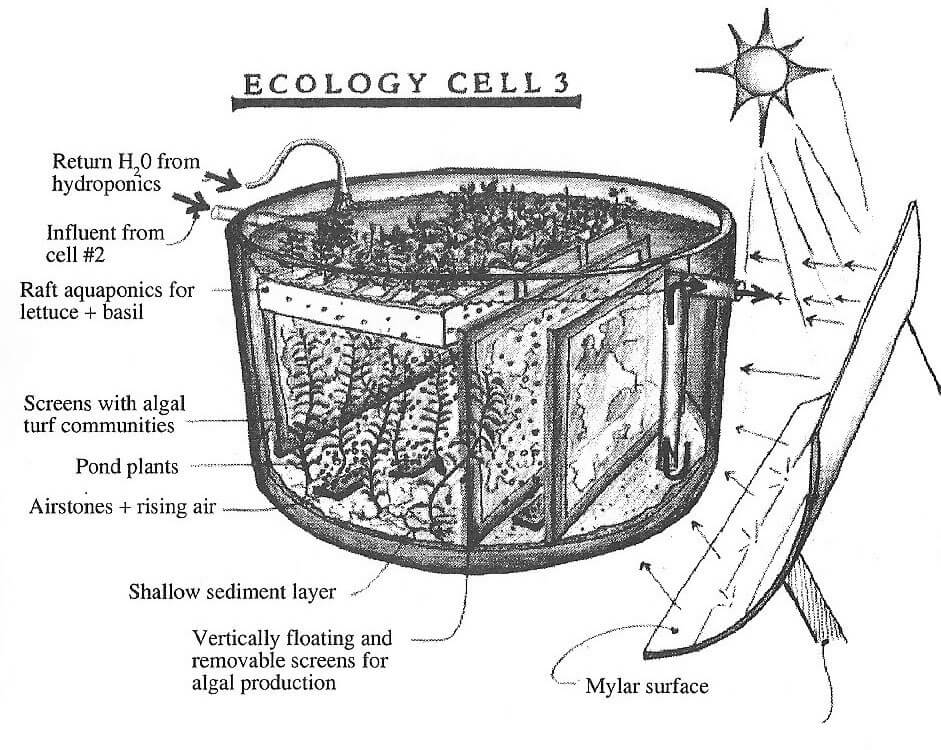 todd_ecology_cells_3