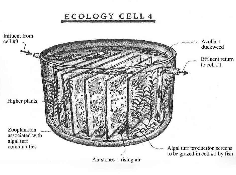todd_ecology_cells_4